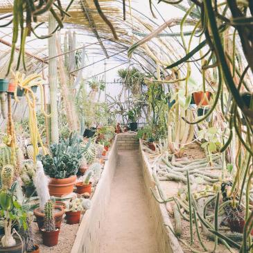 Jardin d'intérieur livré à domicile