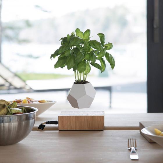 plante en l vitation flyte les raffineurs. Black Bedroom Furniture Sets. Home Design Ideas