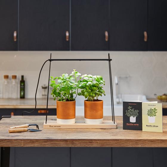 coriandre en pot intrieur plante intrieure luxuriante brillant dans un joli pot studio isol sur. Black Bedroom Furniture Sets. Home Design Ideas