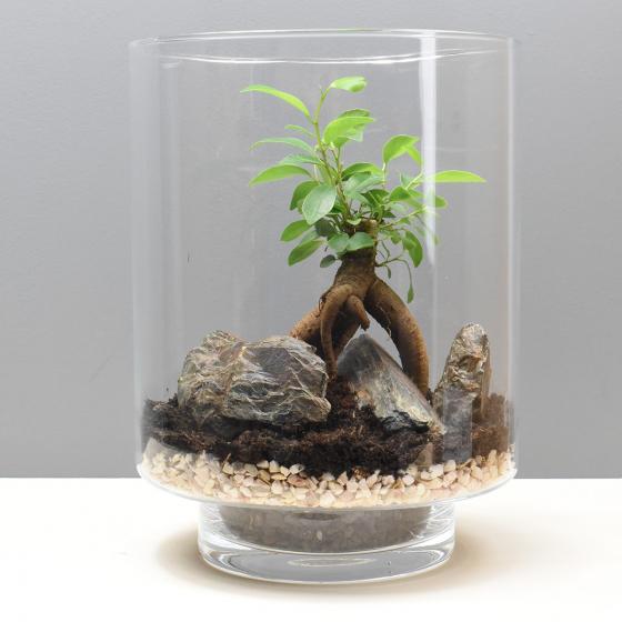 Un terrarium à composer soi-même